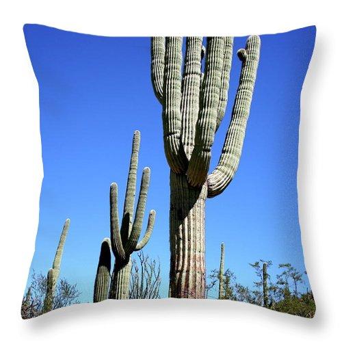 Saguaro Throw Pillow featuring the photograph Saguaro At The Saguaro National Park by Christiane Schulze Art And Photography