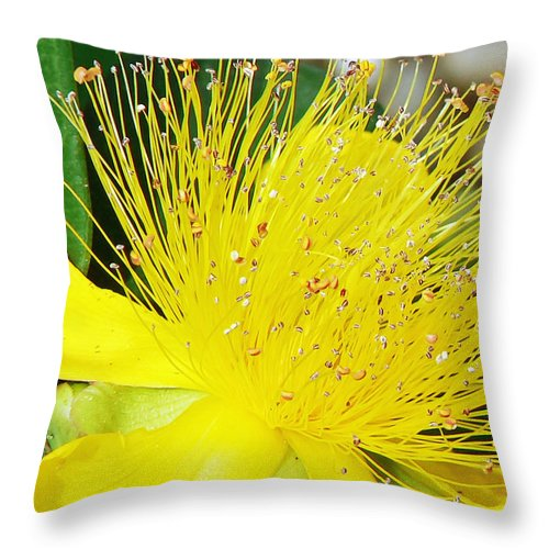 Flower Throw Pillow featuring the photograph Saint Johns Wort by Pamela Patch