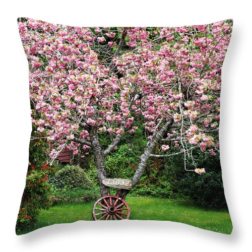 Cherry Blossoms Throw Pillow featuring the photograph Sakura And Wagon Wheel by Peggy Collins