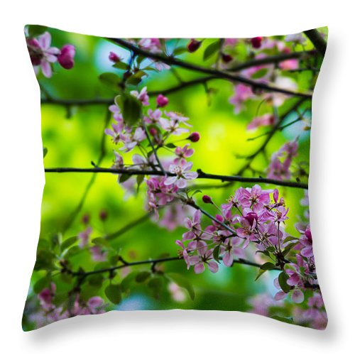 Background Throw Pillow featuring the photograph Sakura Tree In Bloom - Featured 3 by Alexander Senin