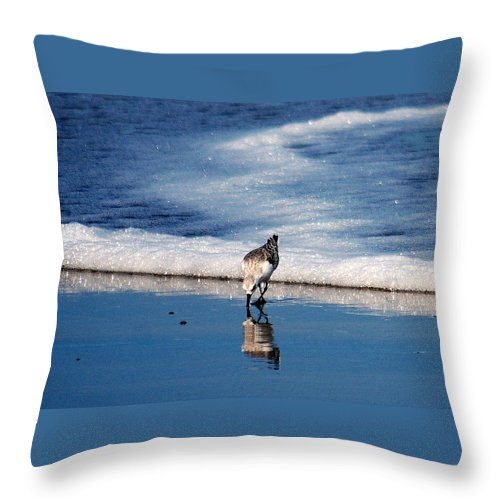Sandpiper Throw Pillow featuring the photograph Sanderling 003 by Larry Ward