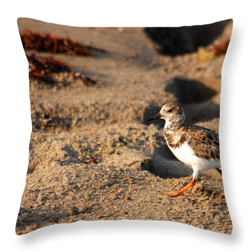 Florida Throw Pillow featuring the photograph Sanderling 005 by Larry Ward