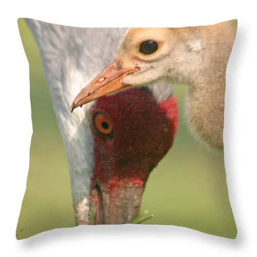 Sandhill Cranes Throw Pillow featuring the photograph Sandhill Crane And Chick by Karen Lindquist