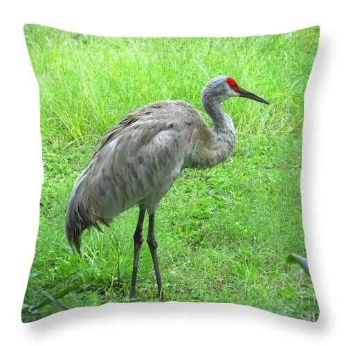 Sandhill Crane Throw Pillow featuring the photograph Sandhill Crane - Bird Photography by Ella Kaye Dickey