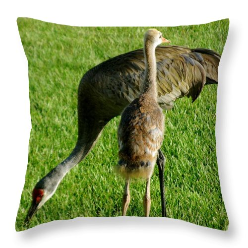 Sandhill Cranes Throw Pillow featuring the photograph Sandhill Crane With Chick II by Zina Stromberg