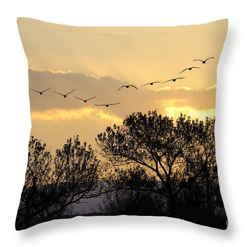 Grus Canadensis Throw Pillow featuring the photograph Sandhill Cranes Flying At Sunset by John Shaw