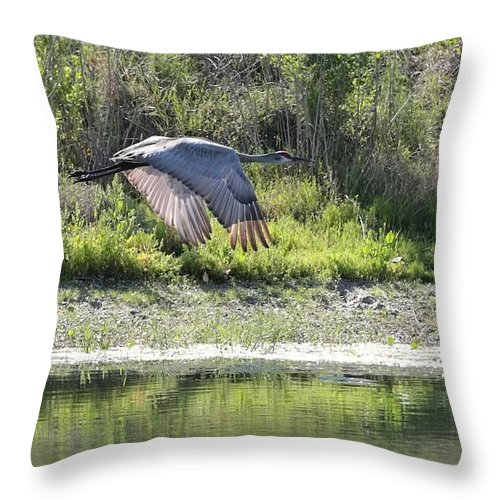 Flying Sandhills Throw Pillow featuring the photograph Sandhill Over The Pond by Carol Groenen