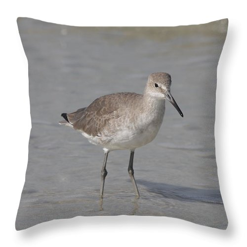 Sandpiper Throw Pillow featuring the photograph Sandpiper by Christiane Schulze Art And Photography