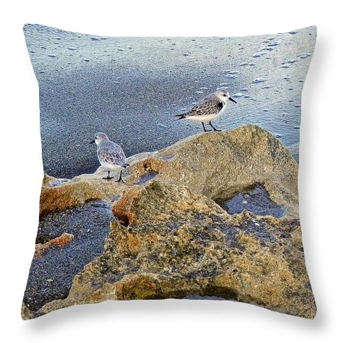 Sandpipers Throw Pillow featuring the photograph Sandpipers On Coral Beach by Joe Wyman