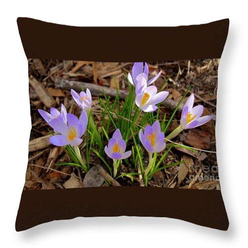Lavender Flower Throw Pillow featuring the photograph Sanford by Joseph Yarbrough