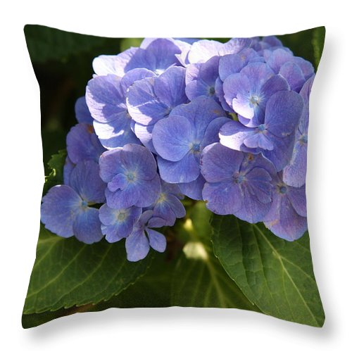 Hydrangea Throw Pillow featuring the photograph Sapphire Dream by Christiane Schulze Art And Photography