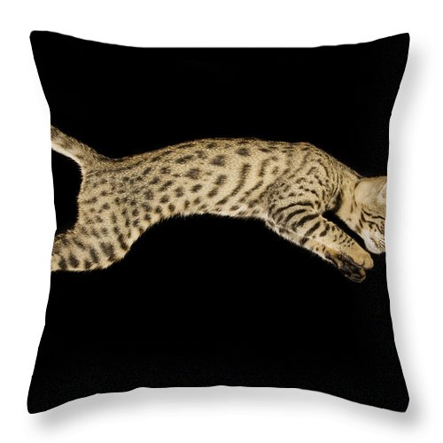 Savannah Cat Throw Pillow featuring the photograph Savannah Cat by Terry Whittaker