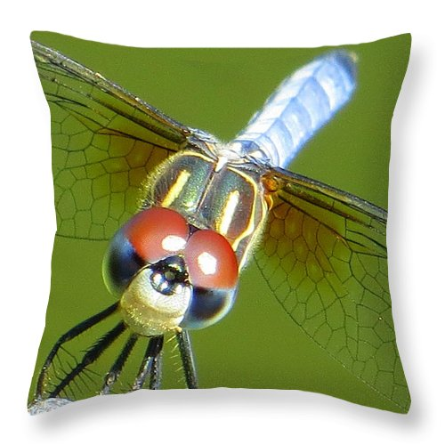 Dragonfly Throw Pillow featuring the photograph Say Cheese by Karen Shackles