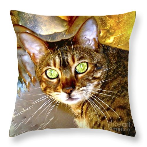 Bengal Cat Throw Pillow featuring the photograph Say What by Phyllis Kaltenbach