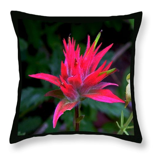 Scarlet Paintbrush On Swiftcurrent Pass Trail In Glacier National Park Throw Pillow featuring the photograph Scarlet Paintbrush On Swiftcurrent Pass Trail In Glacier National Park-montana by Ruth Hager