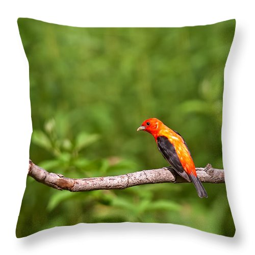 Scarlet Tanager Throw Pillow featuring the photograph Scarlet Tanager On Snag by Randall Branham