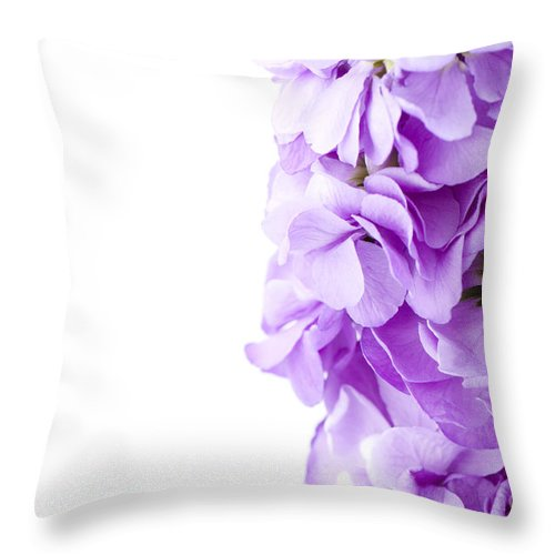Annual Throw Pillow featuring the photograph Scented Stocks by Anne Gilbert