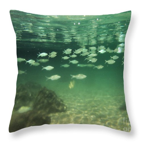 Fish Throw Pillow featuring the photograph School by Ashley Ordines