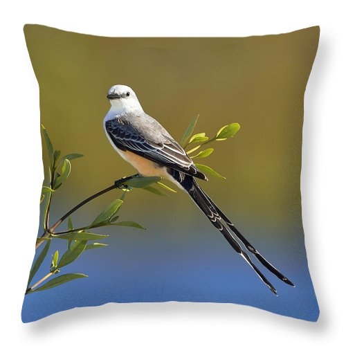 Dodsworth Throw Pillow featuring the photograph Scissor-tailed Flycatcher by Bill Dodsworth