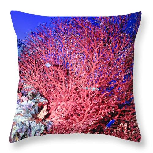 Micronesia Throw Pillow featuring the photograph Sea Fans1 by Dawn Eshelman
