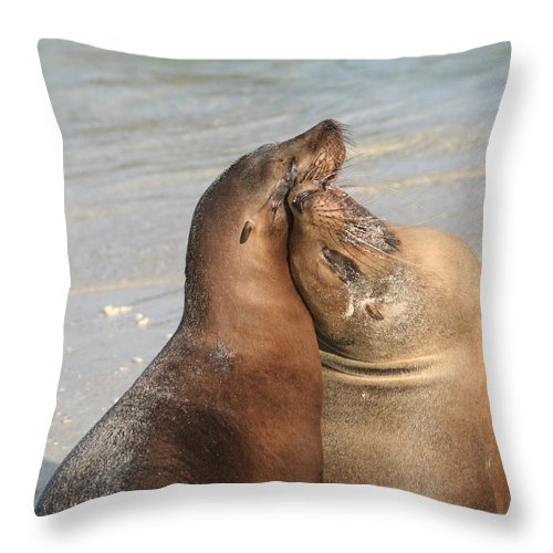 Sea Lion Throw Pillow featuring the photograph Sea Lions In Love by Laurel Talabere