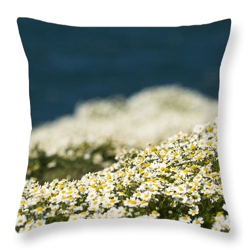 Asteraceae Throw Pillow featuring the photograph Sea Mayweed And The Sea by Anne Gilbert