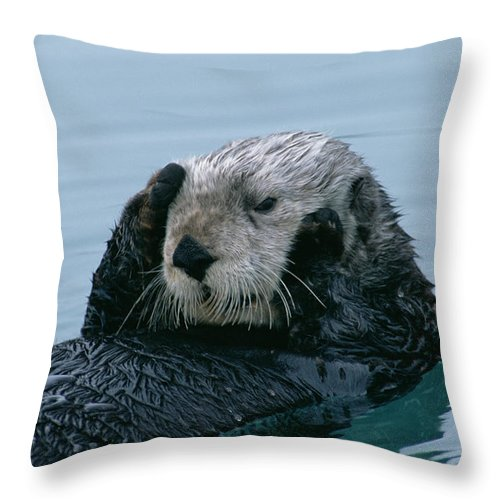 Mp Throw Pillow featuring the photograph Sea Otter Grooming by Matthias Breiter