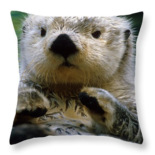 Daytime Throw Pillow featuring the photograph Sea Otter Swimming At Tacoma Zoo Captive by Harry M. Walker