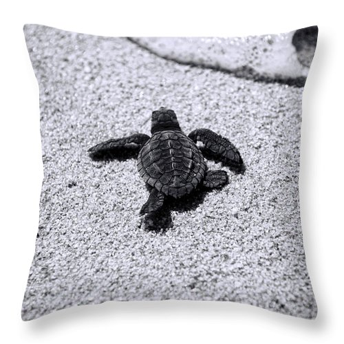 Baby Loggerhead Throw Pillow featuring the photograph Sea Turtle by Sebastian Musial