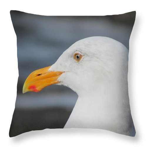 Seagull Throw Pillow featuring the photograph Seagull by Amanda Roberts