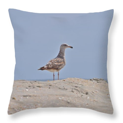 Seagull Throw Pillow featuring the photograph Seagull N Sand by Bridgette Gomes