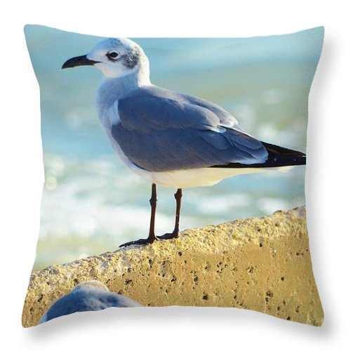 Shore Birds Throw Pillow featuring the photograph Seagull On Sea Wall by Carol McGunagle
