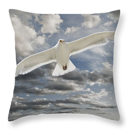 Seagull Throw Pillow featuring the photograph Seagull by Rick Mosher