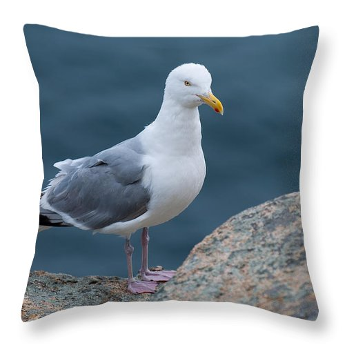 Acadia National Park Throw Pillow featuring the photograph Seagull by Sebastian Musial