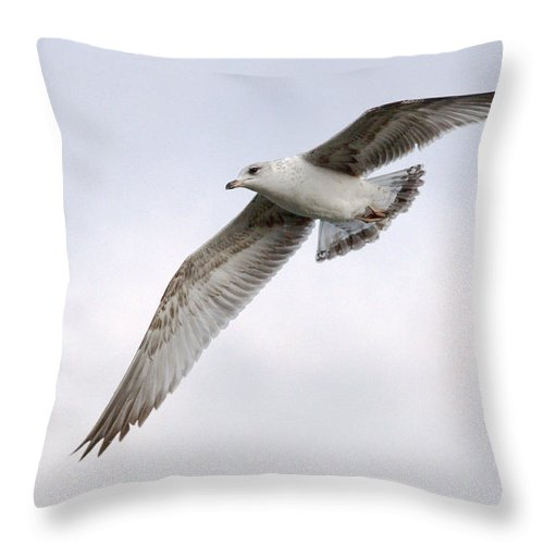 Roy Williams Throw Pillow featuring the photograph Seagull Soaring Under Pale Blue Sky by Roy Williams