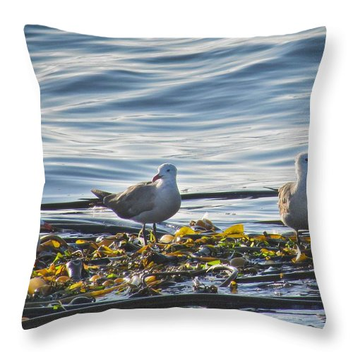Seascape Throw Pillow featuring the photograph Seagulls In Victoria Bc by Natalie Rotman Cote