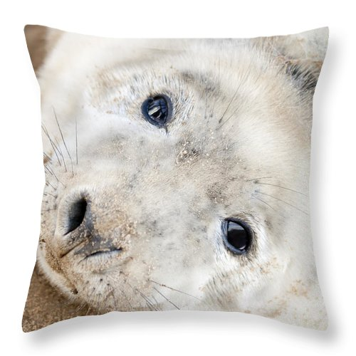 Seal Throw Pillow featuring the photograph Seal Pup by Gillian Dernie