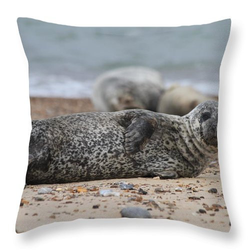 Seal Throw Pillow featuring the photograph Seal Pup On Beach by Gordon Auld