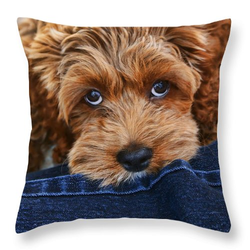 Cockapoo Throw Pillow featuring the photograph Seamus by Nikolyn McDonald