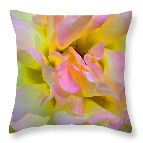Rose Throw Pillow featuring the photograph Seattle's Rose by KCatia Creole Art