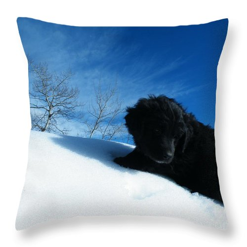 Black Throw Pillow featuring the photograph Second Thoughts by Brian Boyle