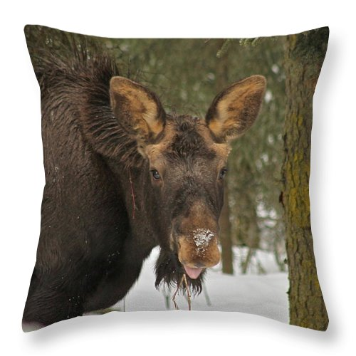 Moose Throw Pillow featuring the photograph See You by Rick Monyahan