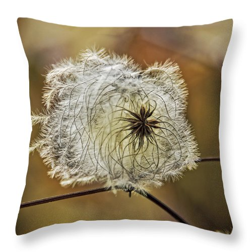 Seed Throw Pillow featuring the photograph Seed Pod by Phil Cardamone