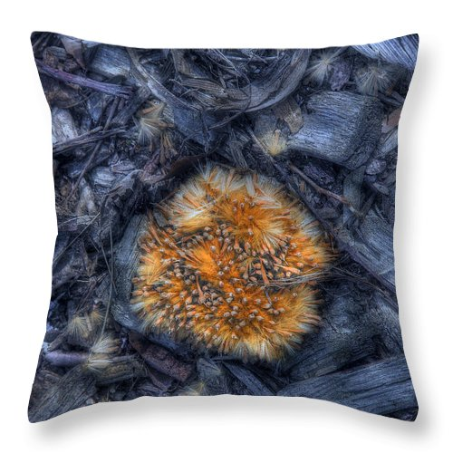 Seed Throw Pillow featuring the photograph Seed Pod by Tom Mc Nemar