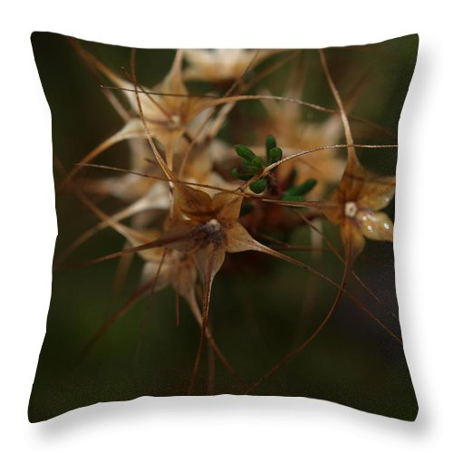 Seeds Throw Pillow featuring the photograph Seedhead Trio by Michaela Perryman