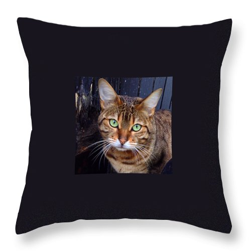 L4l Throw Pillow featuring the photograph Miou by Fiorenzo Di Marco