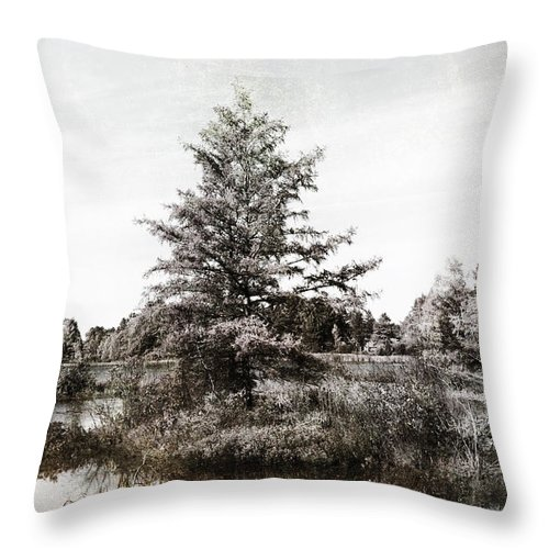 Evie Throw Pillow featuring the photograph Seney Silver And Chocolate by Evie Carrier