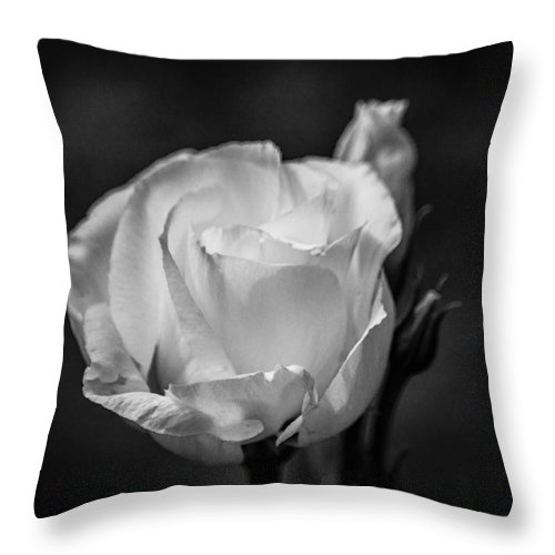 Flower Throw Pillow featuring the photograph Sensory Satisfaction by Bill Pevlor
