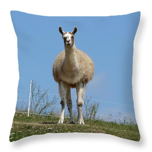 Lama Throw Pillow featuring the photograph Sentinel by Valerie Ornstein