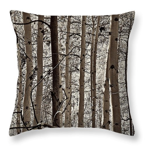 Aspen Throw Pillow featuring the mixed media Sepia Aspens by Charles Muhle